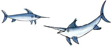 peces-espada